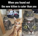 When You Found Out The New Kitten Is Cuter Than...