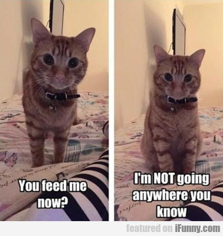 You Feed Me Now? I'm Not Going Anywhere...