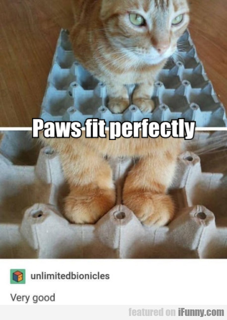 Paws Fit Perfectly. Very Good