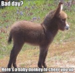Bad Day? Here's A Baby Donkey To Cheer You Up