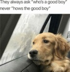 They Always Ask Who's A Good Boy Never Hows The...