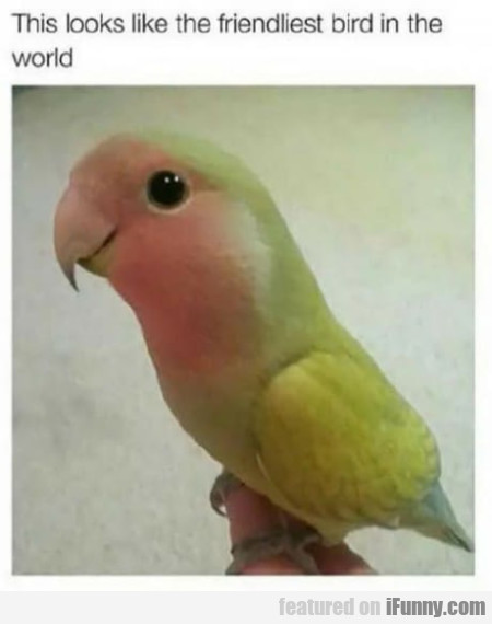 This Looks Like The Friendliest Bird In The World