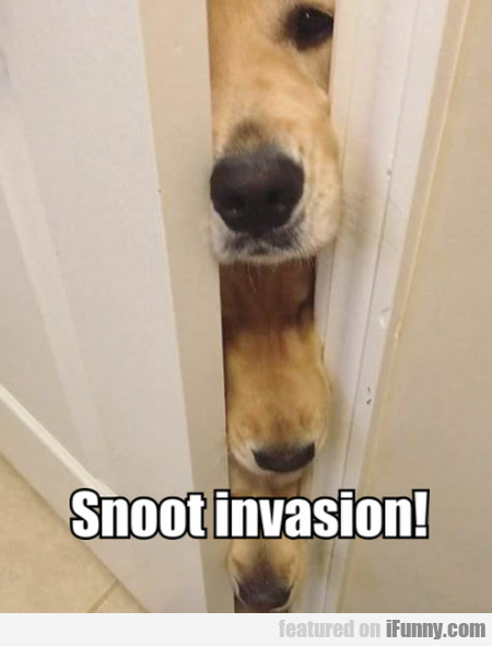 Snoot Invasion!