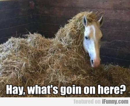 Hay, What's Goin On Here?