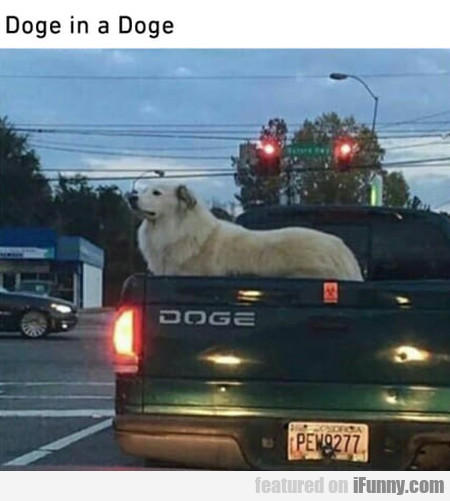 Doge In A Doge