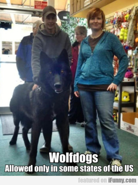 Wolfdogs. Allowed Only In Some States Of The Us