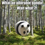 What An Adorable Panda! - Wait What?