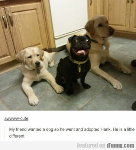 My friend wanted a dog so he went and adopted Hank