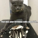 That Was Your Birthday Cake Wasn't It?
