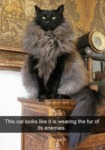 This Cat Looks Like It Is Wearing The Fur Of Its..