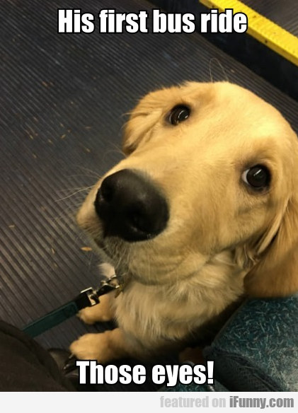 His First Bus Ride. Those Eyes!