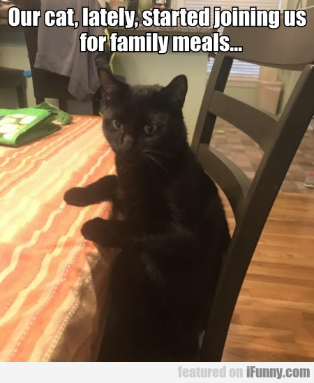 Our Cat Lately Started Joining Us For Family Meals