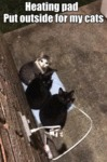 Heating Pad Put Outside For My Cats