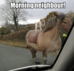 Morning Neighbour!