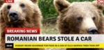Romanian Bear Stole A Car...