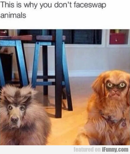 This is why you don't faceswap animals
