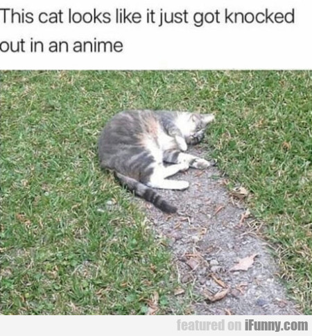 This Cat Looks Like It Just Got Knocked Out...