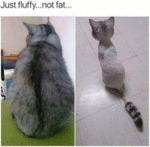 Just Fluffy...not Fat
