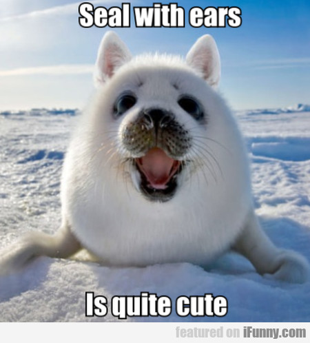 Seal With Ears - Is Quite Cute