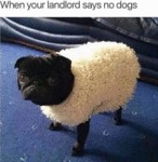 When Your Landlord Says No Dogs...