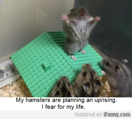 My Hamsters Are Planning An Uprising. I Fear...