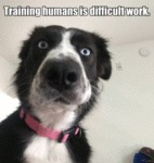 Training Humans Is Difficult Work