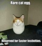 Rare Cat Egg. Reserved For Easter Festivities