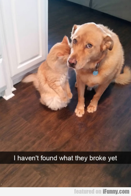 I Haven't Found What They Broke Yet...