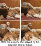 After His Surgery She Stayed By His Side Like...