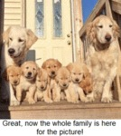 Great Now The Whole Family Is Here For The Picture