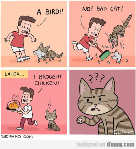 A Bird!! No! Bad Cat! I Brought...