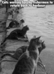 Cats Waiting For The Fishermen To...