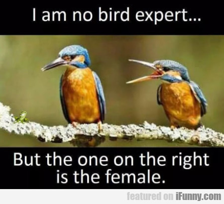 I Am No Bird Expert... But The One On The Right...
