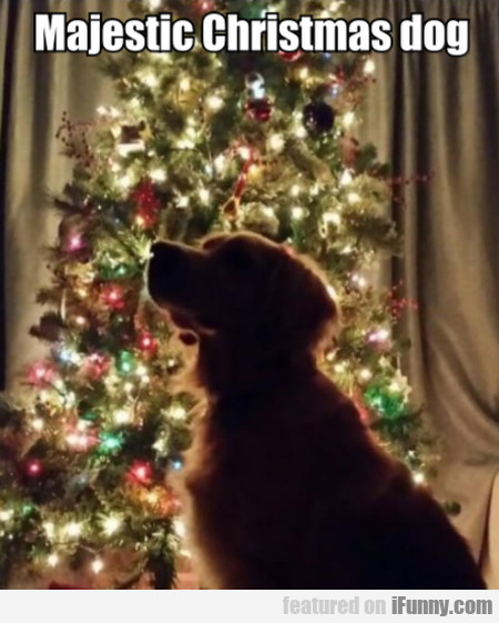 Majestic Christmas Dog