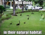 Mini Dinos In Their Natural Habitat