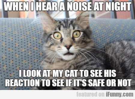 When I Hear A Noise At Night I Look At My Cat...