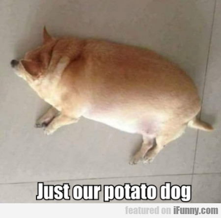 Just Our Potato Dog