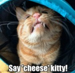 Say 'cheese' Kitty!