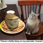There's A Fluffy Thing On My Pancake Human!
