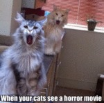 When Your Cats See A Horror Movie