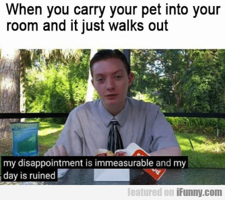 When You Carry Your Pet Into Your Room And...