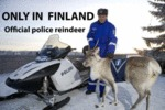 Only In Finland - Official Police Reindeer
