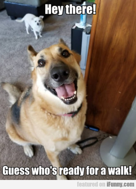 Hey There! Guess Who's Ready For A Walk!