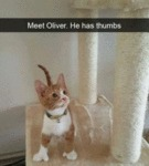 Meet Oliver. He Has Thumbs.