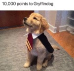 10000 Points To Gryffindog