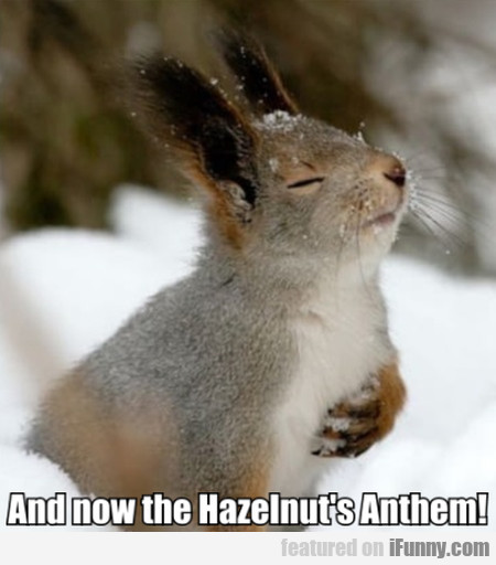And Now The Hazelnut's Anthem!
