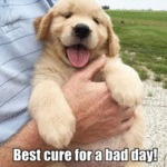 Best Cure For A Bad Day!