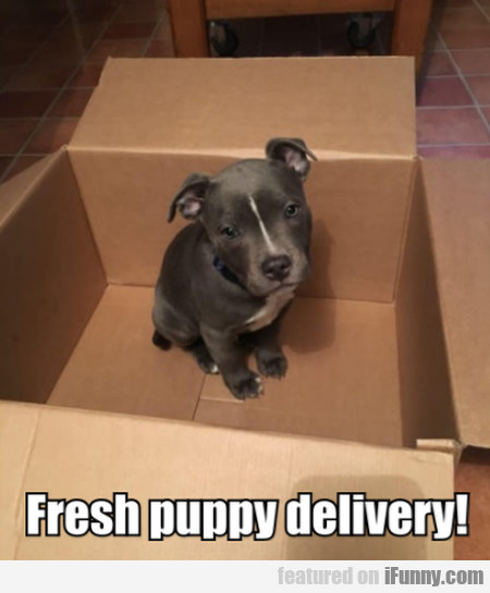 Fresh Puppy Delivery!