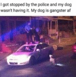 I Got Stopped By The Police And My Dog Wasn't...