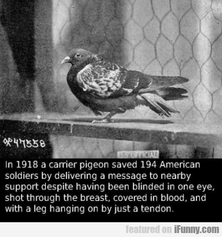 In 1918 A Carrier Pigeon Saved 194 American...